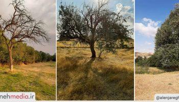 طبیعت روستای النجارق