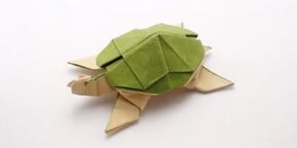 لاکپشت کاغذی