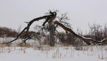 درخت در زمستان