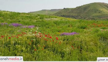 طبیعت سرسبز دامنههای کوهستان بوزقوش واقع در روستای سیه منصور