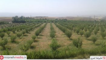 باغات روستای زرنکش