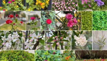 گل های زیبای طبیعت میانه