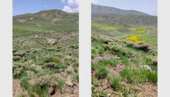 طبیعت بهاری ییلاق شکر دره سی ارتفاعات بوزقوش (ییلاق گلنگدر)