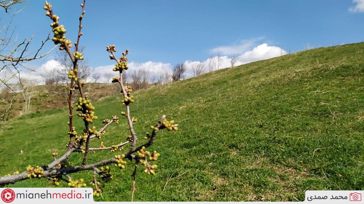 بهار دیشاب