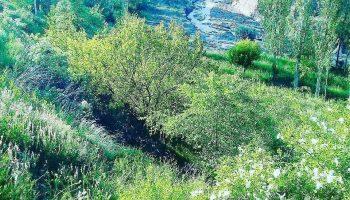 عکس روستای قشلاق برزلیق