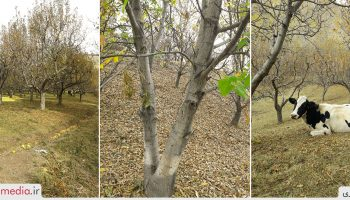 طبیعت منطقه بلوکان ترکمنچای