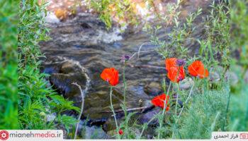 طبیعت روستای بولوکان