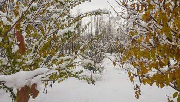 خودنمایی زمستان در پاییز
