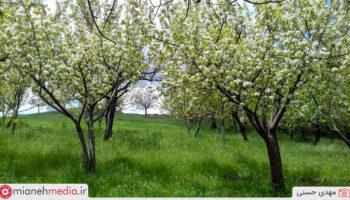 طبیعت روستای کسلان