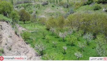 طبیعت روستای کاسالان