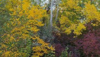 خودنمایی پاییز در طبیعت روستای بالسین میانه