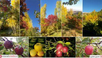 طبیعت زیبای پاییزی و برداشت سیب روستای آوین