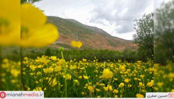 طبیعت روستای آوین