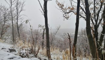 برف پاییزی میانه