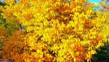 زیبایی و جلوه نمایی پاییز در طبیعت روستای ایشلق