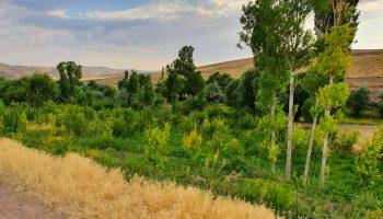 روستای بجووان