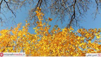 پاییز آوین