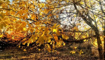طبیعت پاییزی آونلیق