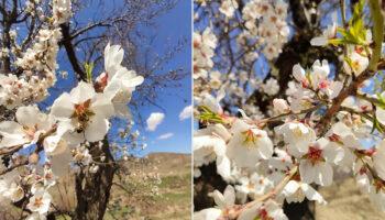 طبیعت روستای قلعه جوق نجفقلی خان